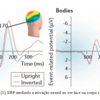 What is ERP EEG Evoked Potential?